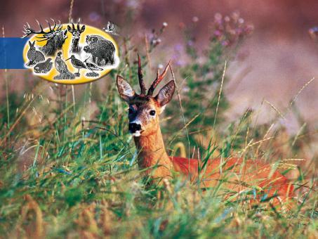 Baßners Wild 3 Wildschutzmischung WSM3