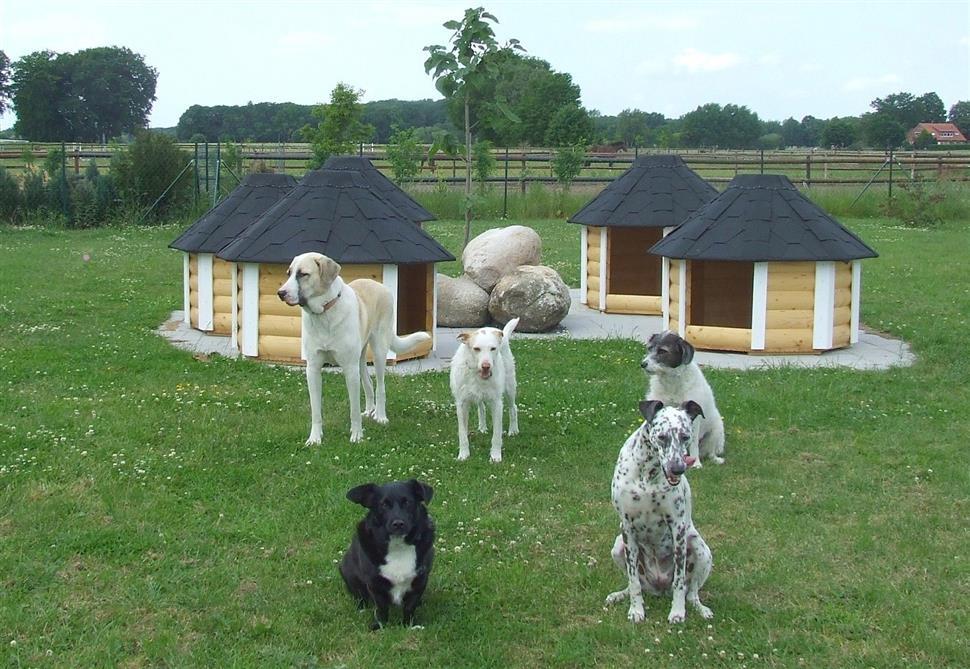 hundekota hundehütte 8-eckig grün grün » jagdeinrichtung direkt vom